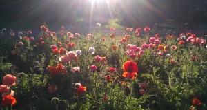 Botaniska trädgården. Foto: Arkiv
