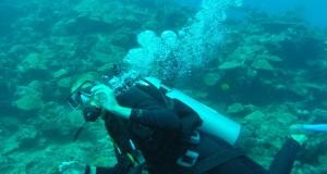 Sara Pettersson som pluggar  på ekosystemteknikprogrammet i Lund spenderade sommaren med hajar. Foto: Privat