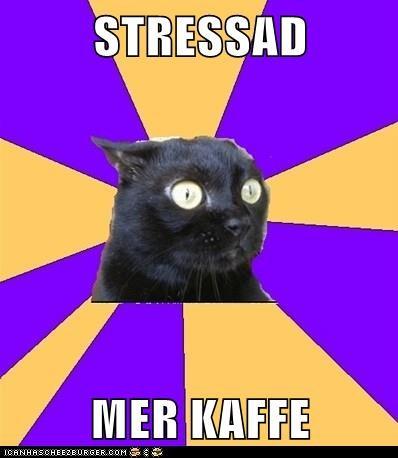 En stressad katt med texten Stressad – Mer Kaffe