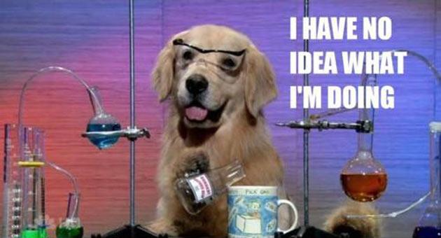 "Hund med texten ""I have no idea what I'm doing"""
